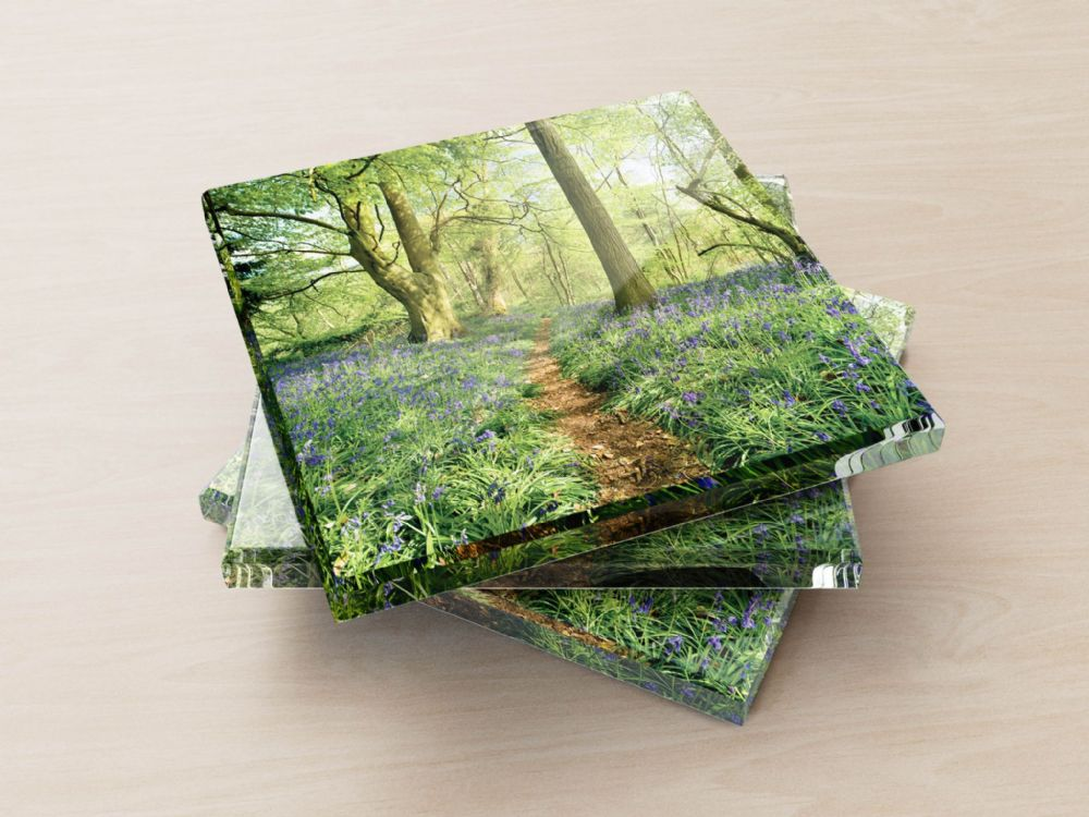 Thursford Wood, Norfolk - Glass Coasters